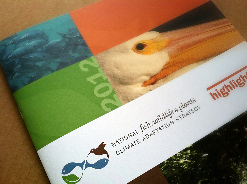 Brochure cover design for climate adaptation initiative. Allegro Design.