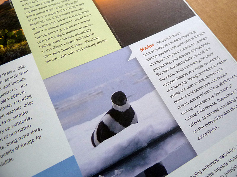 Print design for climate adaptation initiative. Allegro Design.