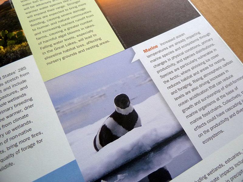 Print design for climate adaptation initiative. Allegro Design.