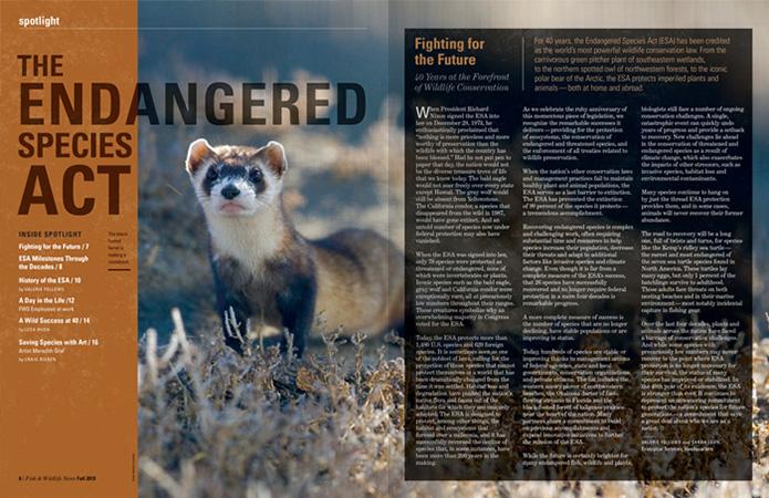 magazine design feature spread   Allegro Design   Portland, OR