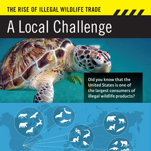Wildlife trafficking exhibit panel detail. Design by Allegro Design.