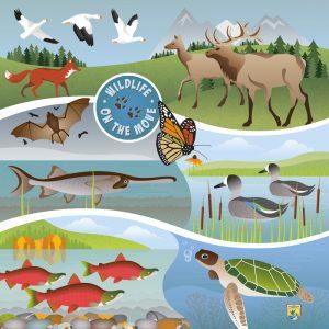 Wildlife in their habitats illustration. Jane Pellicciotto/Allegro Design